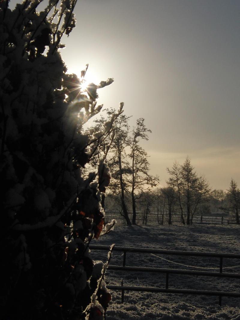 wintertuin-30-1-11