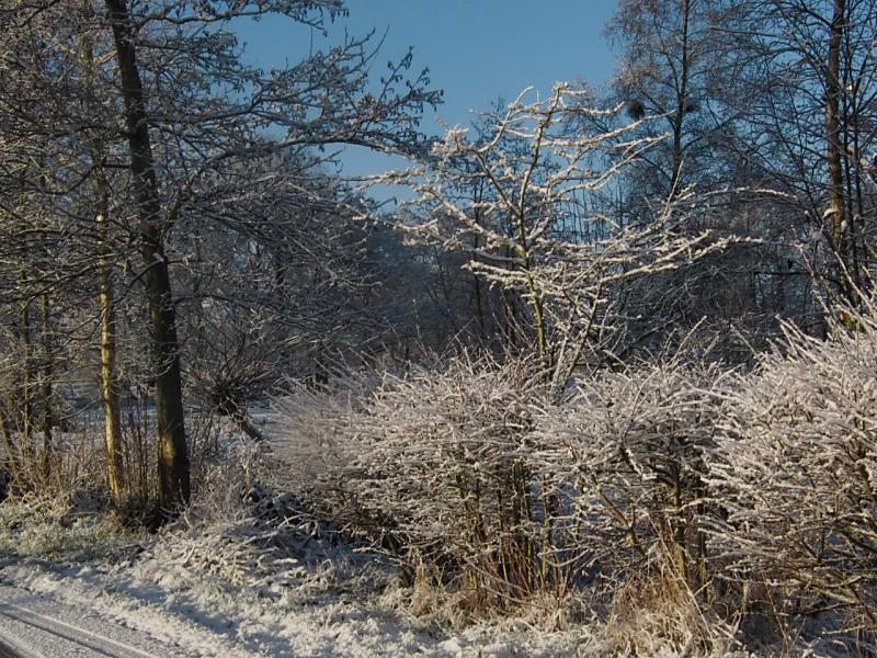 wintertuin-30-1-13