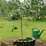 een appelboompje van Willem (broer Marjanne)